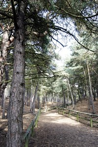 Formby Pinewoods Walks - 10th Sept